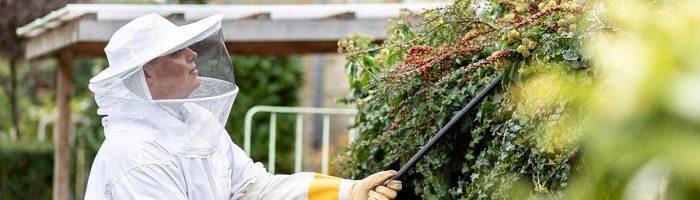 Fjernelse af hveps i København og på Sjælland