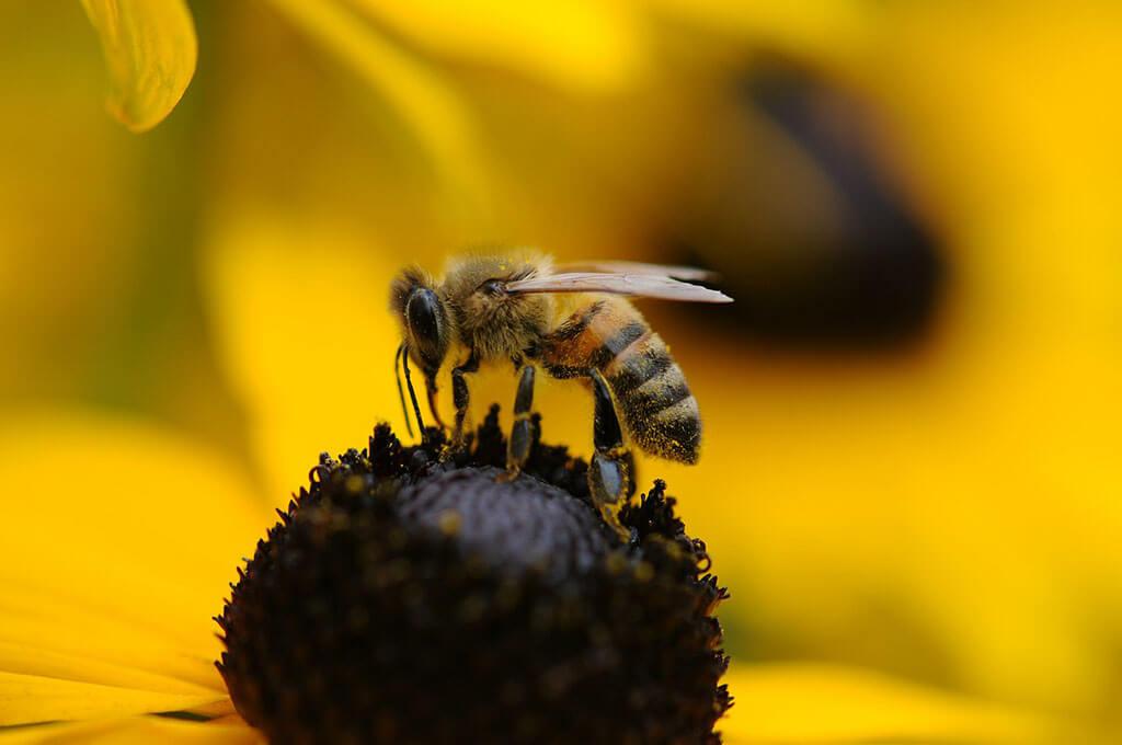 Hvepsebekæmpelse i København og på Sjælland